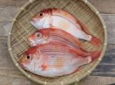 A027-4野生現撈赤鯮魚150g~200g
